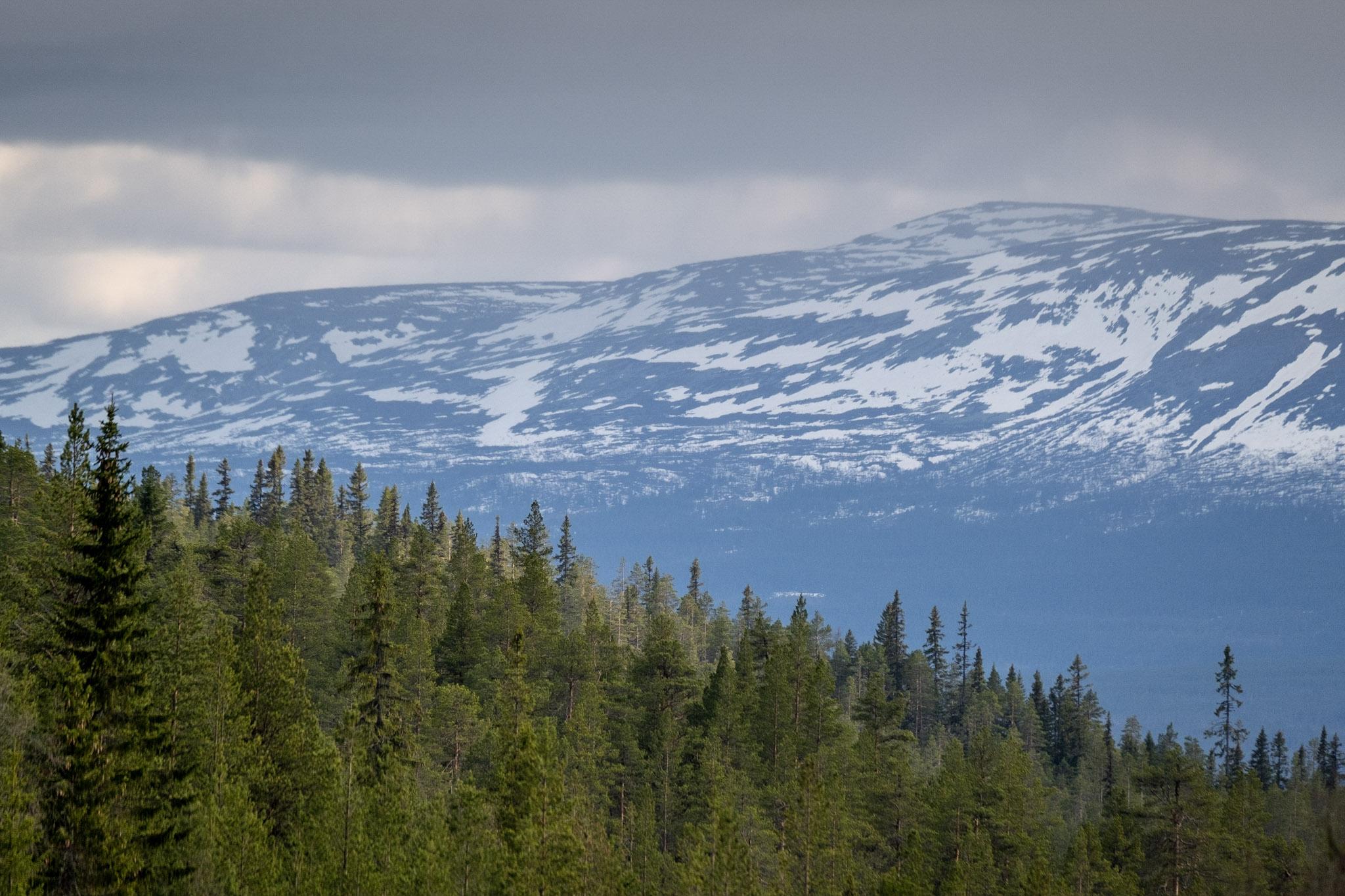 Berg i bakgrunden, skog i förgrunden